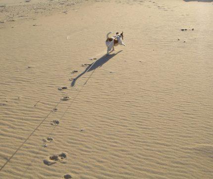 Rosie on the Beach